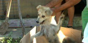 tierleid-befreitehunde